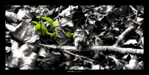 new life by Raymate