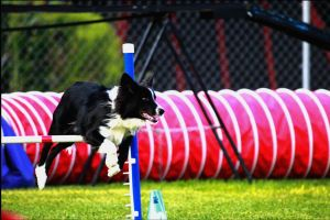Perfect Agility Scenery by JasperBC