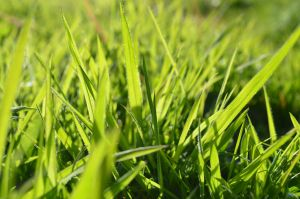 Grass I by PC-STOCK