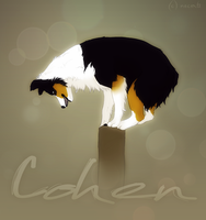 cohen by Necerti