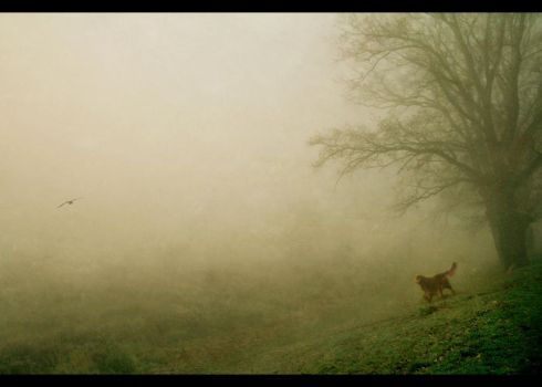 Misty morning by Cambion-Art