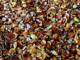 Leaves Stock by cycoze