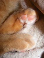 Little Kitty Toes by cosmicspider