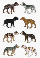 Catahoula Leopard Dog Import Litter by VolatileVisage