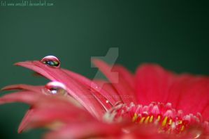 Droplets and pink petals... by amzb87