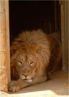 In the lions den by x-crossroad