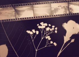 Flowers and film photogram by CrystalisedX