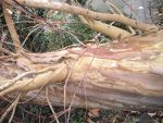 fallen tree closeup by banjosandwitch