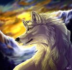 White wolf by WolfRoad