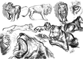 lion study by Cynthi-art