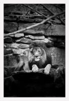 King of the Pride by kithfan21