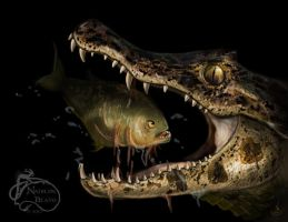 Caiman Crocodile eating a Piranha by NadilynBeato