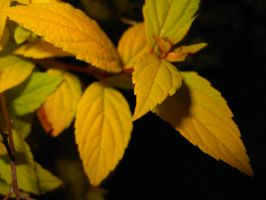 Leaves by Child-of-Minerva