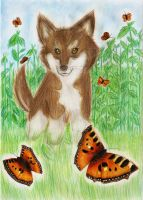 Wolf cub with butterflies by Babydoll-chan