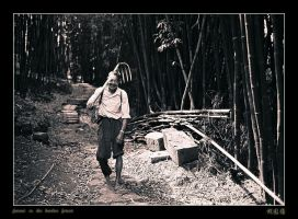 farmer in the bamboo forest by davidmcb