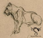 Lioness Sketches 2 by Steve-Ellis