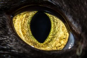 I see you by cheever