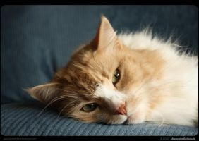 A Cat's Life by AlexandreGuilbeault