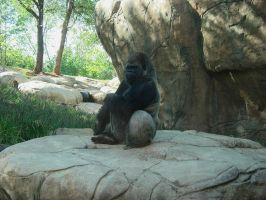 Gorilla 2 by bluejewel24