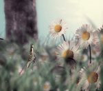 Mini world - In the daisies by mimi-san3