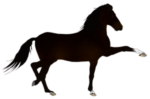 Andalusian Auction Horse 3 by HoofHaven