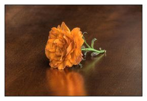 Carnation by andrewmcconville