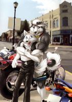 Husky and wolf by J-C