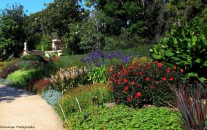 Royal Botanic Gardens, Melbourne 3 by Okavanga