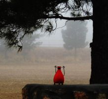 Fog -n- Red by SharPhotography