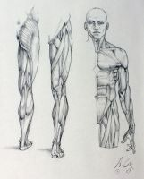 anatomy 01 by andrewcox