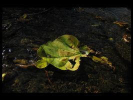 Leaf on the Water by devianb