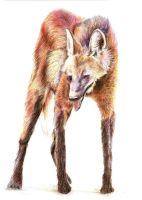 Maned wolf by MalaAssia