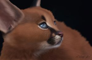 [Personal] Caracal by Etskuni