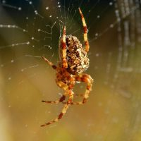 Spider droplets... by quaddie