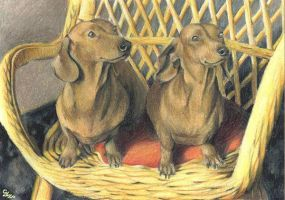 Dachshund pair sitting by ZsofiaGyuker