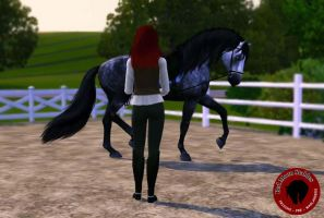Ultima - Dressage 01 by Lady-Orcanie
