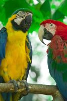 Macaws 002 by otas32