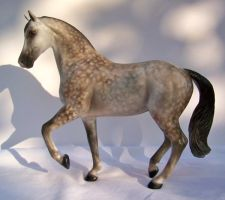 CM Dapple grey Warmblood by darchiel