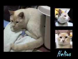 my cat Helios by srs17