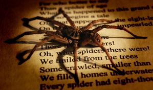 Oh, What Spiders There Were by Entophile