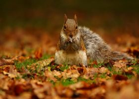 The Fat Squirrel by Roxi71