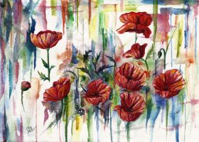 Poppies by Sasha-Drug