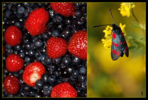 Berries and butterfly by citrina