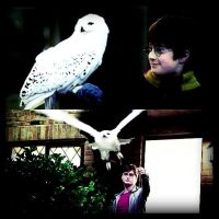 take your flight hedwig by x--photographygirl