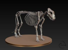 Misc - Lion Skeleton by Peet-B