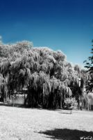 . IR Pond . by WinGzx87