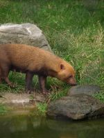 Bush Dog by xHalloweenx
