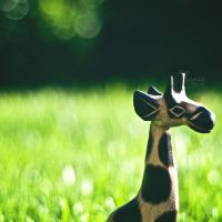 Giraffe by NanaPHOTOGRAPHY