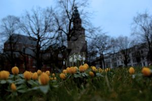 Spring at the foot of the Martinitower by harlia