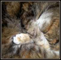 Cat Abstract... by rockgem